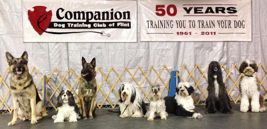 The Club Companion Dog Training Club Of Flint