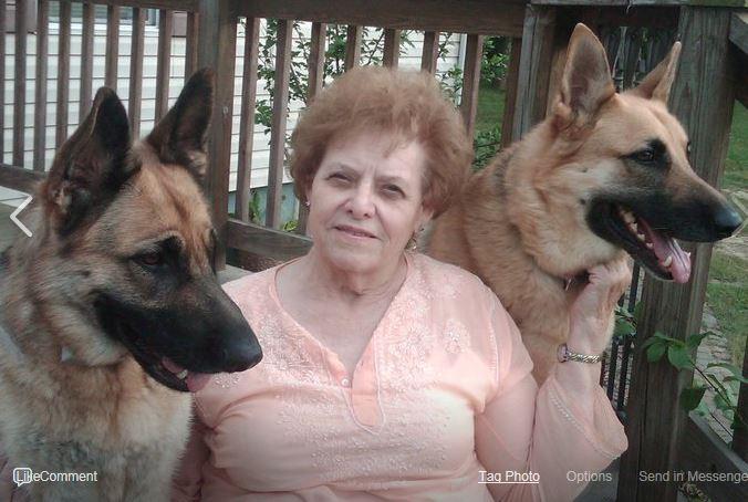 Agility Beginners Companion Dog Training Club Of Flint